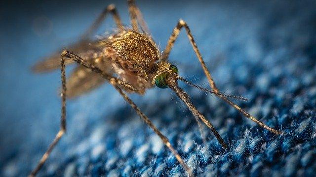 Haushaltsmittel gegen Mücken