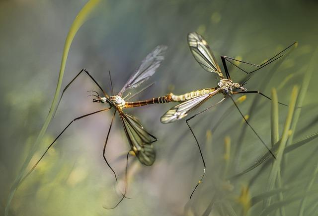 Vitamin B gegen Stechmücken