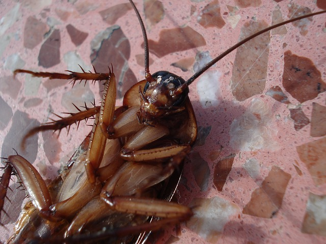 Kakerlaken im Haus