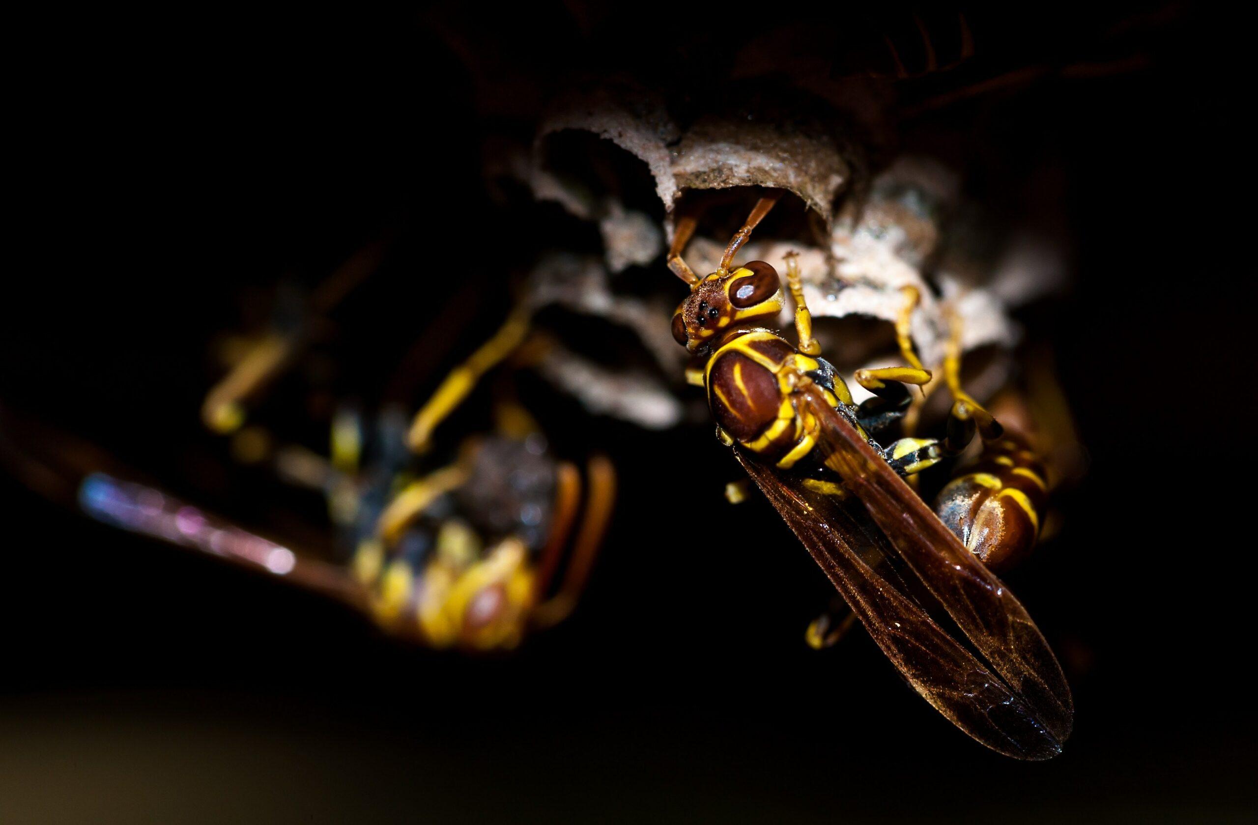 Tipps gegen Wespen